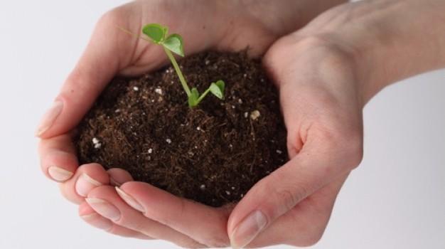 Terriccio per semina - metodo biodinamico
