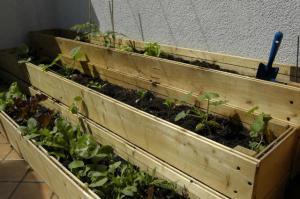 Come Fare un Orto sul Terrazzo | Coltivare Orto in Terrazza