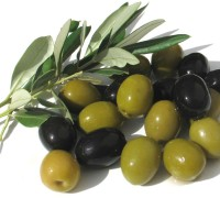 mosche delle olive